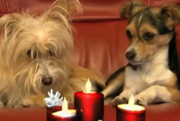 dogs candles